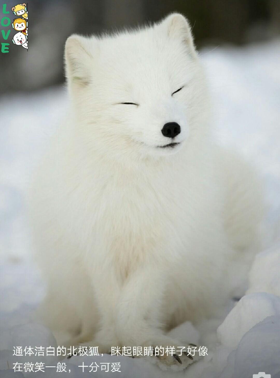 一群美丽可爱的动物奉上,萌萌哒!