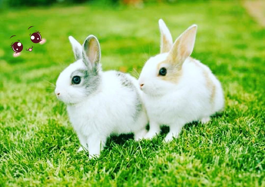 壁纸 动物 兔子 1080_762
