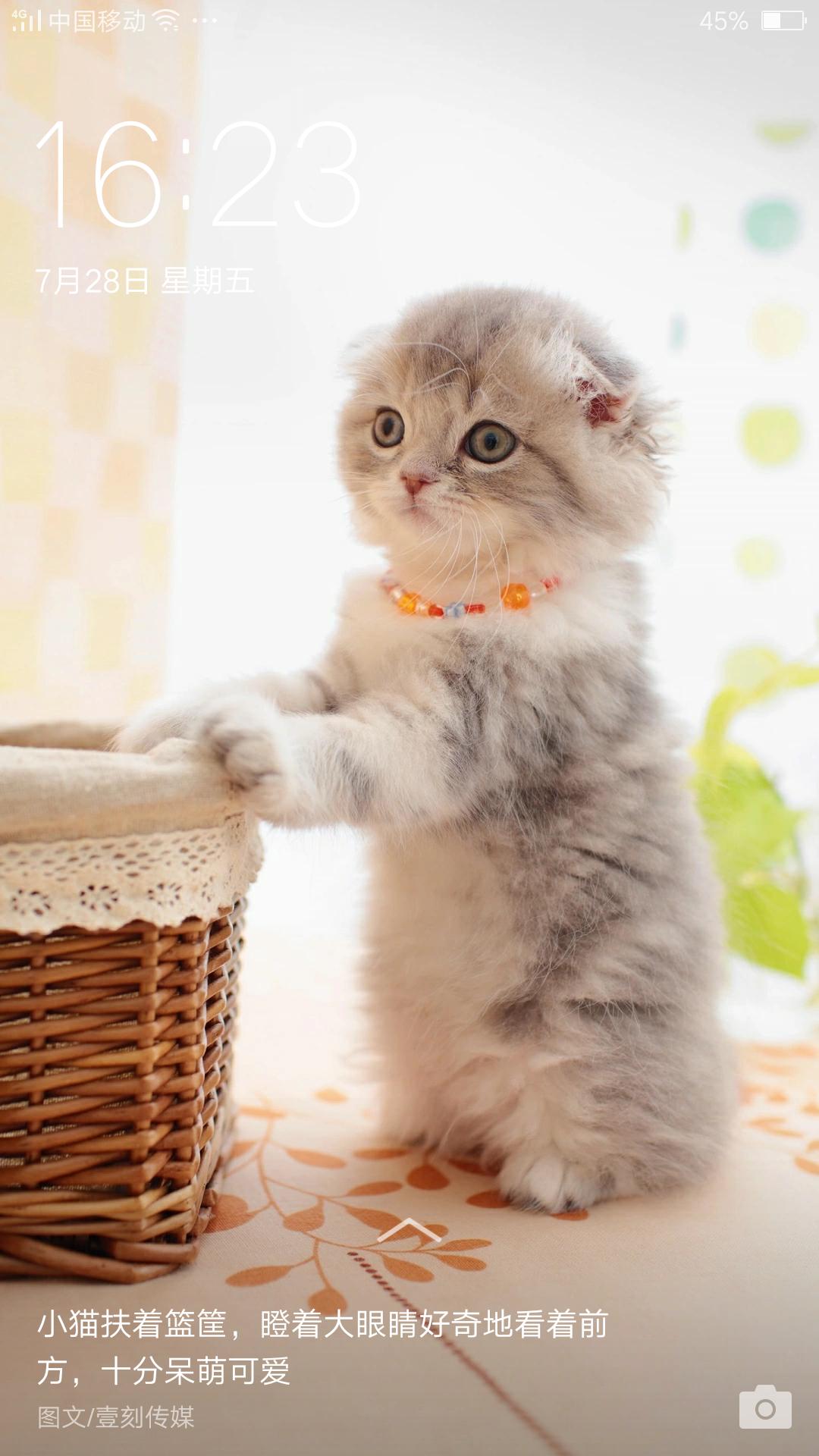 好可爱的猫咪