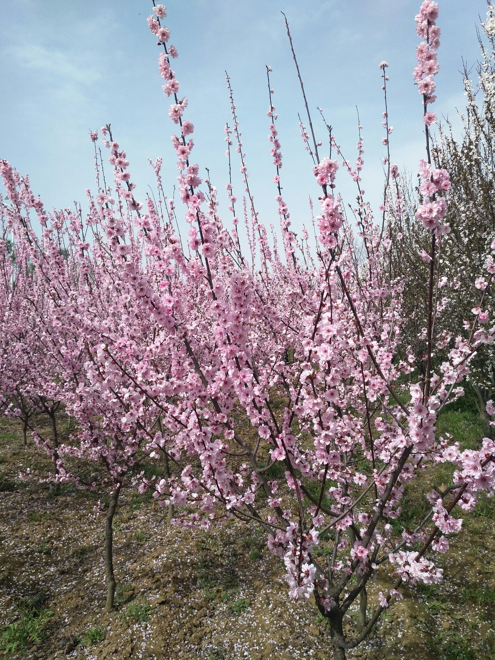 春天的风.