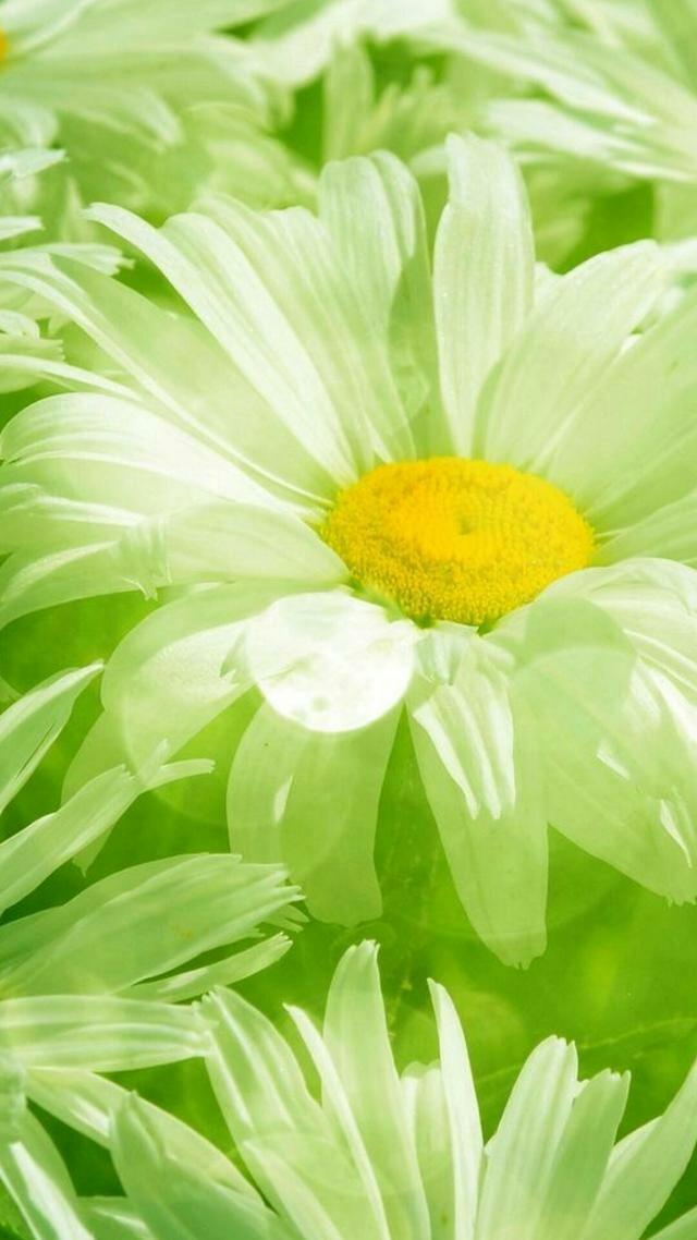 高清护眼绿色壁纸欣赏_帖子_oppo手机官方社区