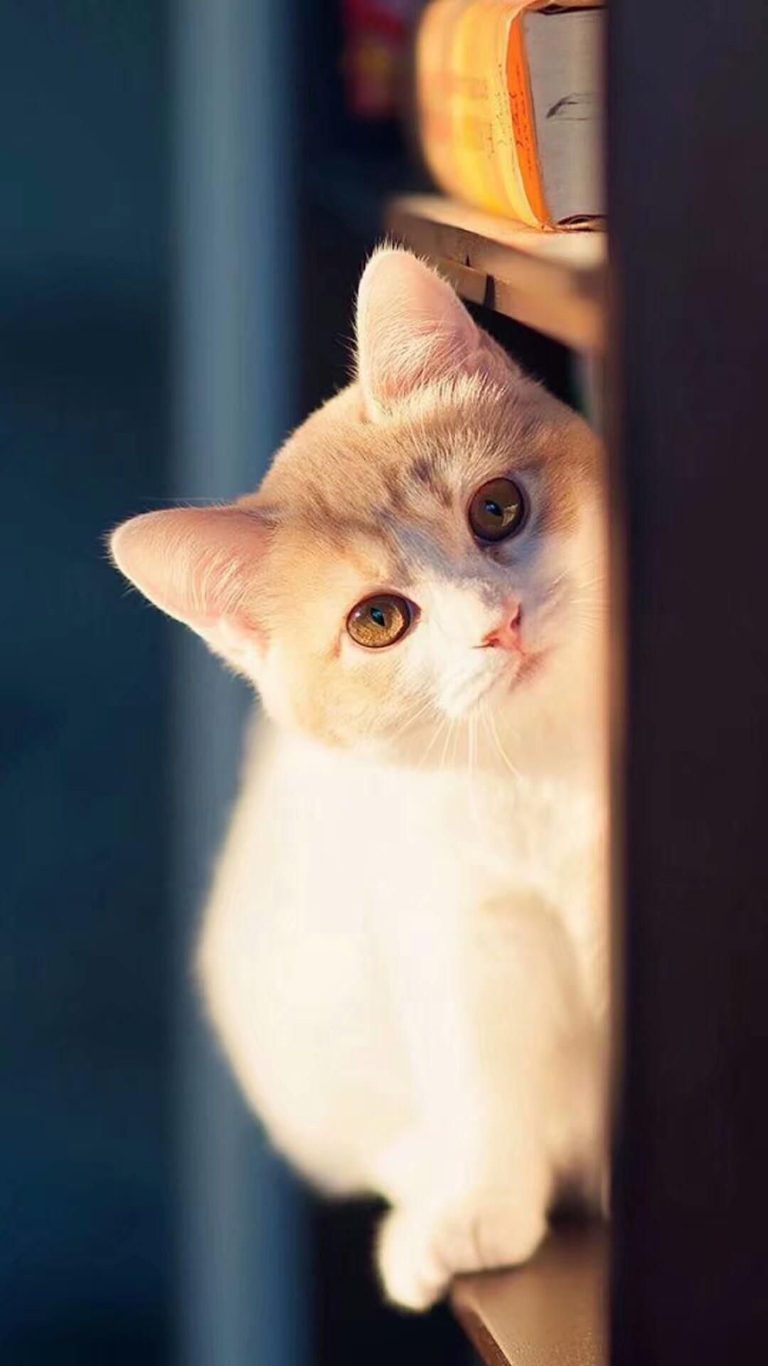 壁纸 动物 猫 猫咪 小猫 桌面 1080_1920 竖版 竖屏 手机
