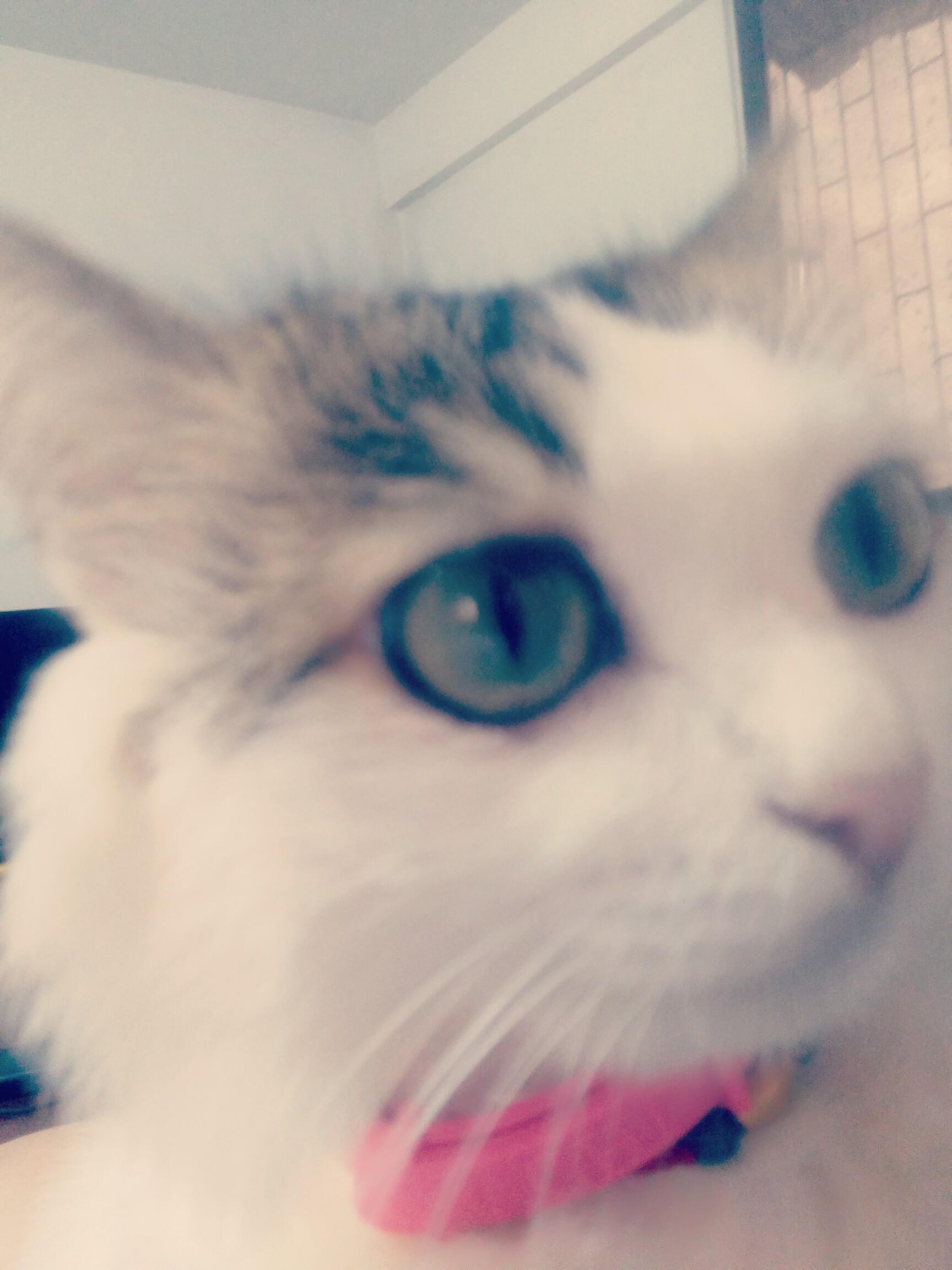 大眼睛,小可爱!