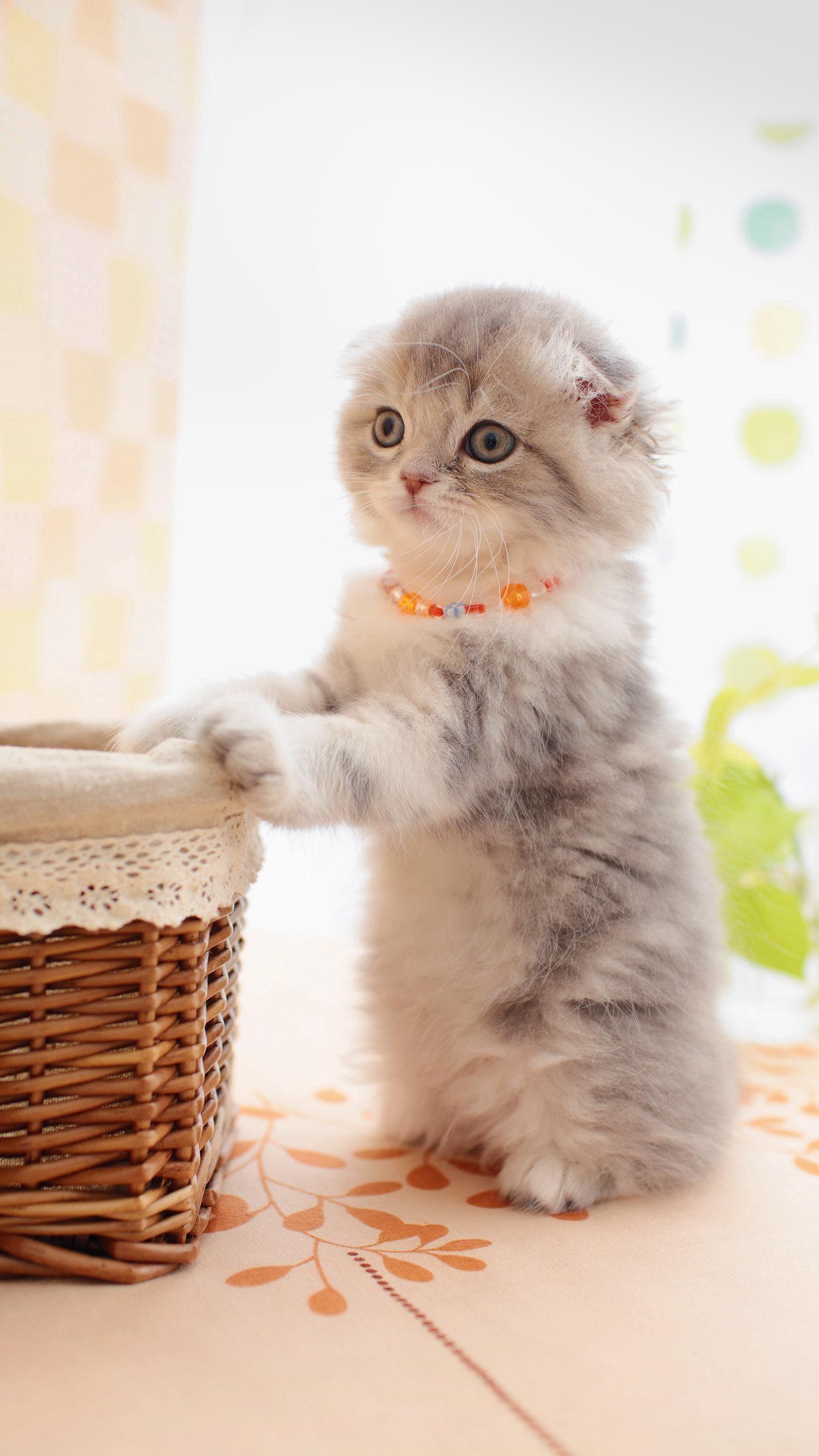 早安猫咪_表情大全
