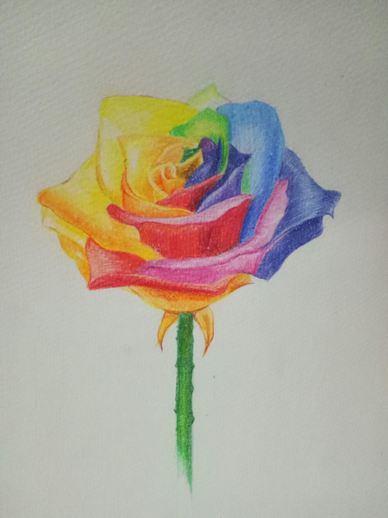 第一次彩铅画玫瑰