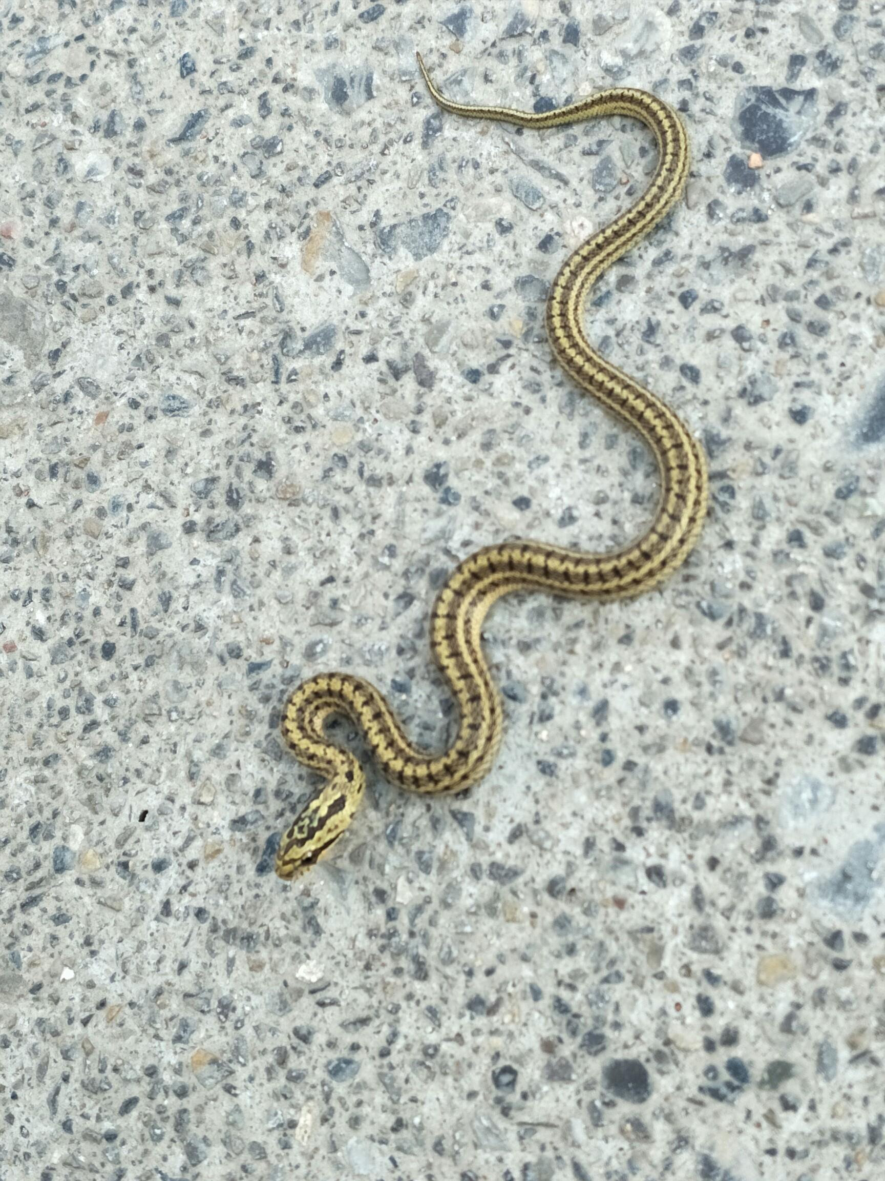 马路上的小蛇