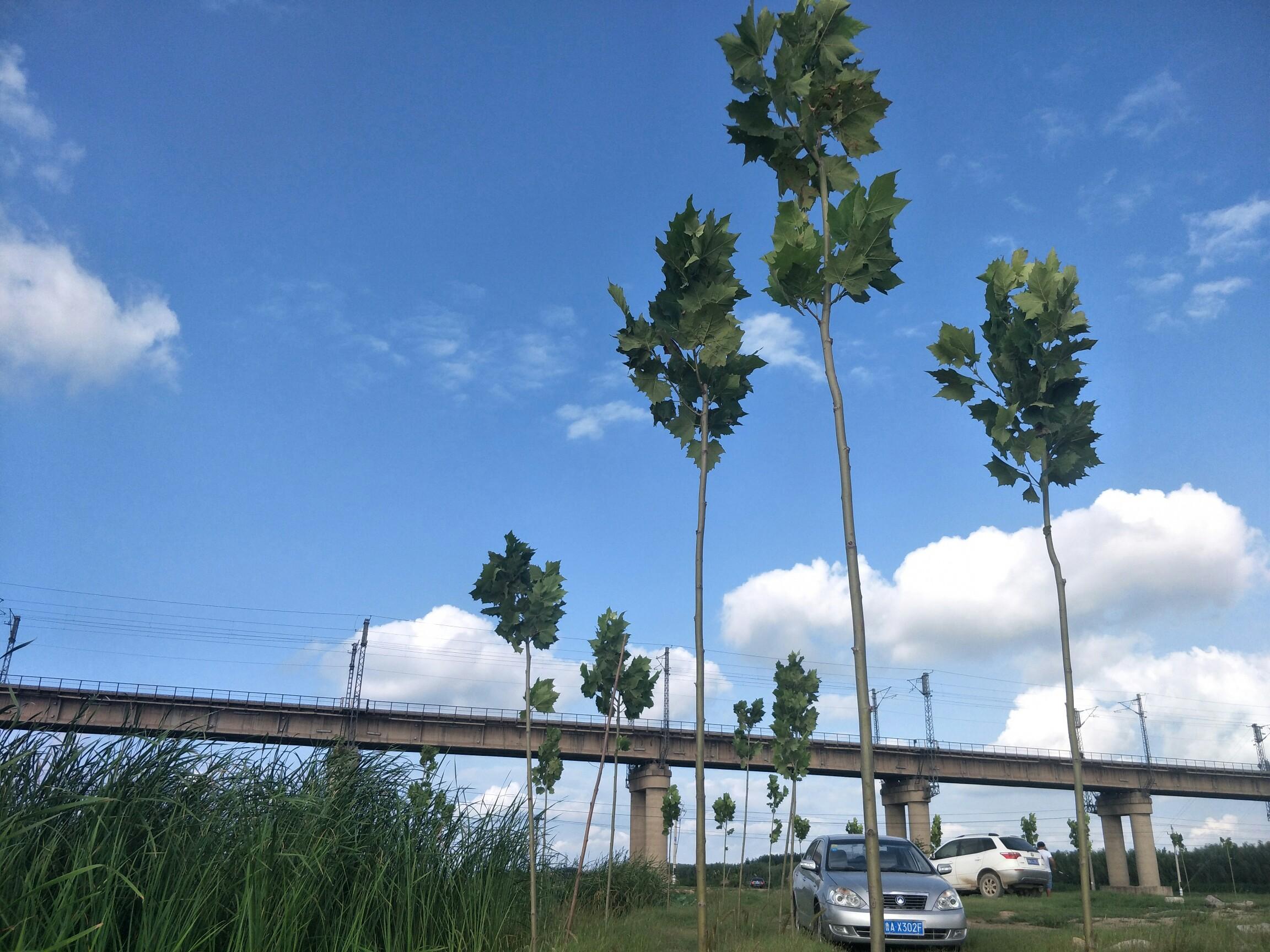 蓝天白云绿树.