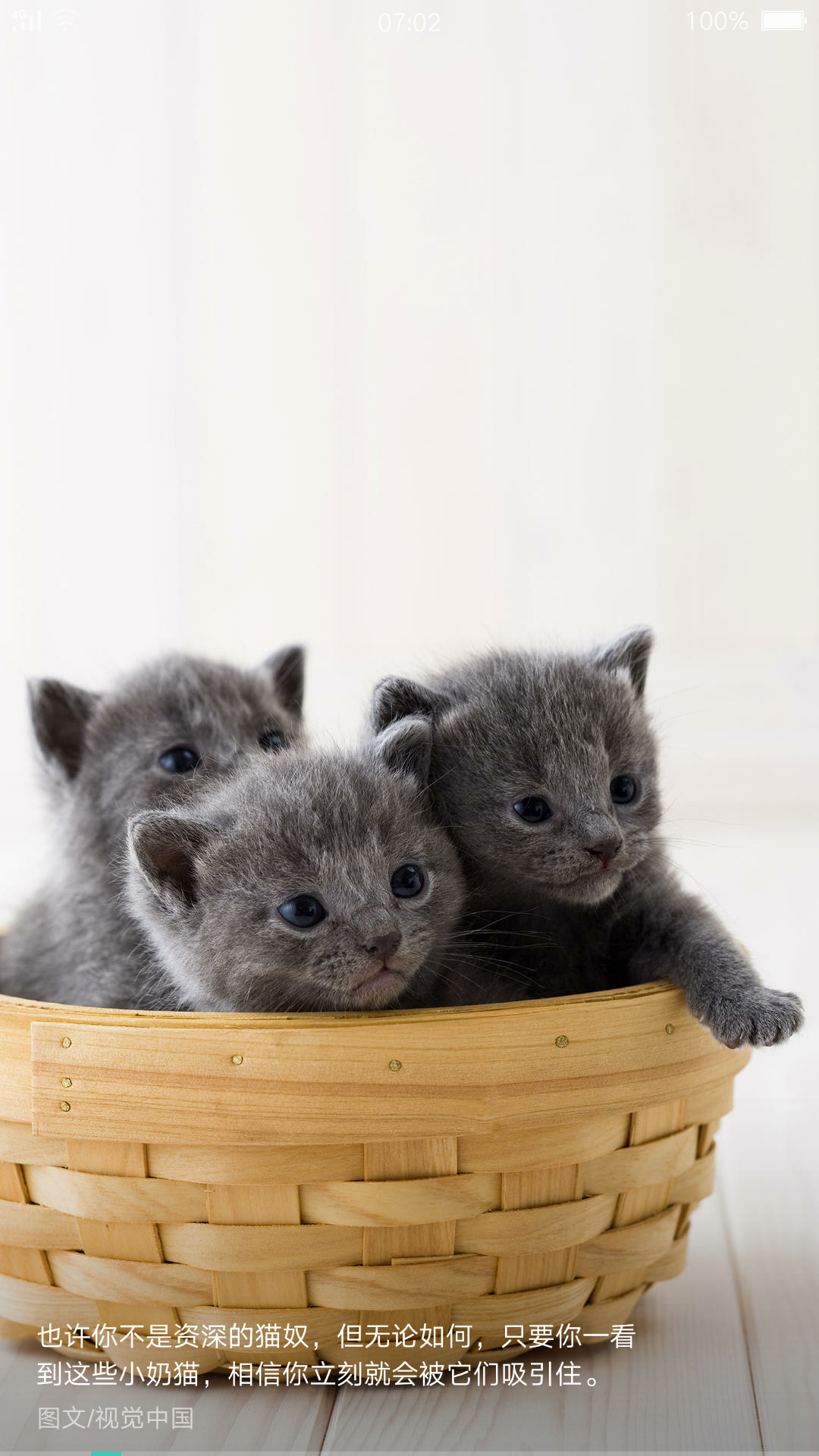 猫咪是世界上最可爱的动物