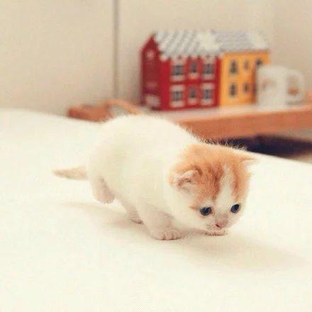 可爱小猫比心图片