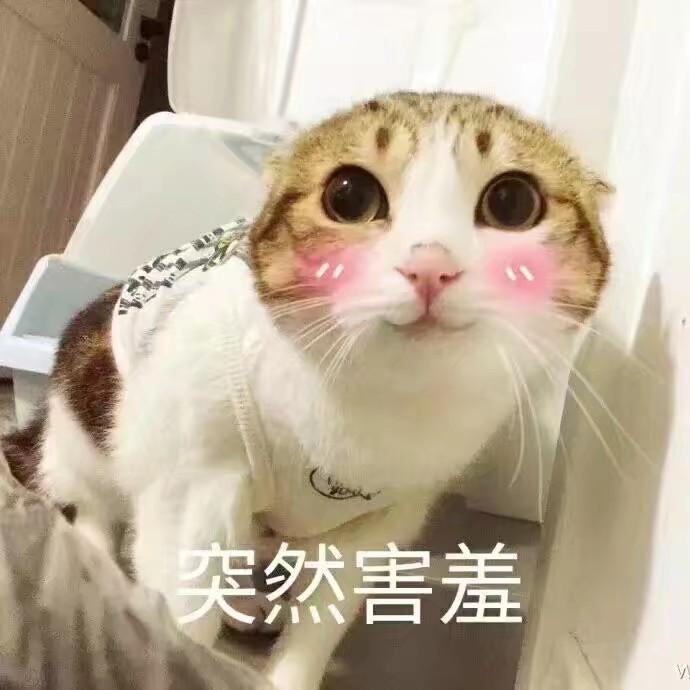 猫猫可爱的表情包