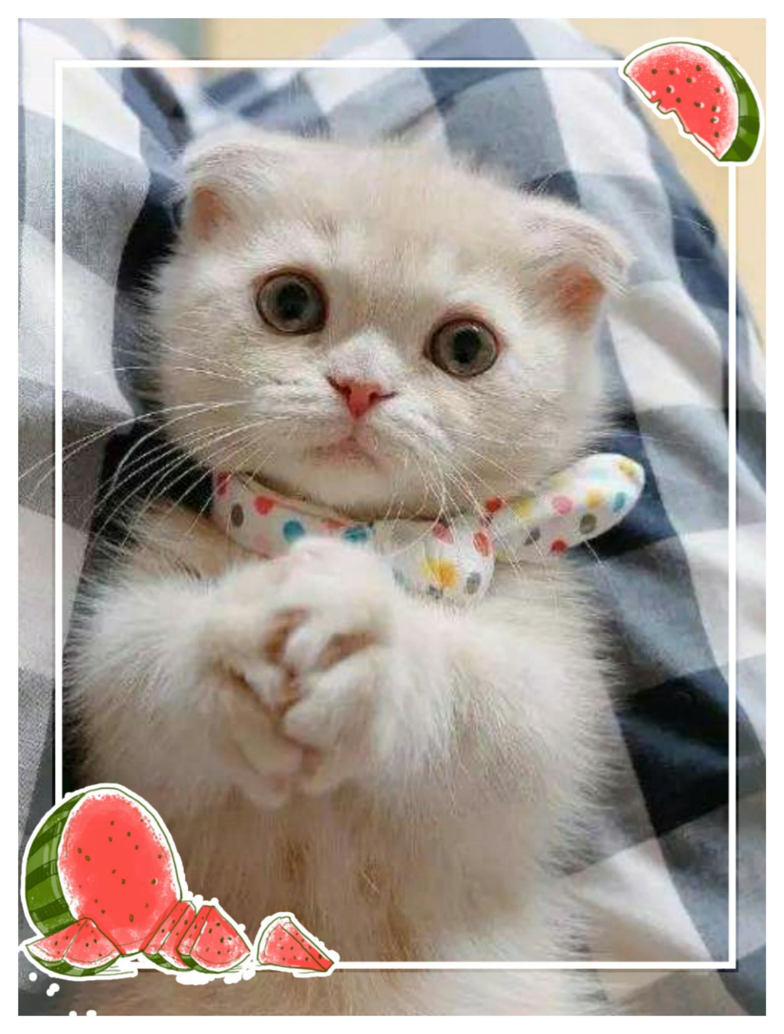 这是我家的小猫咪可爱吧!