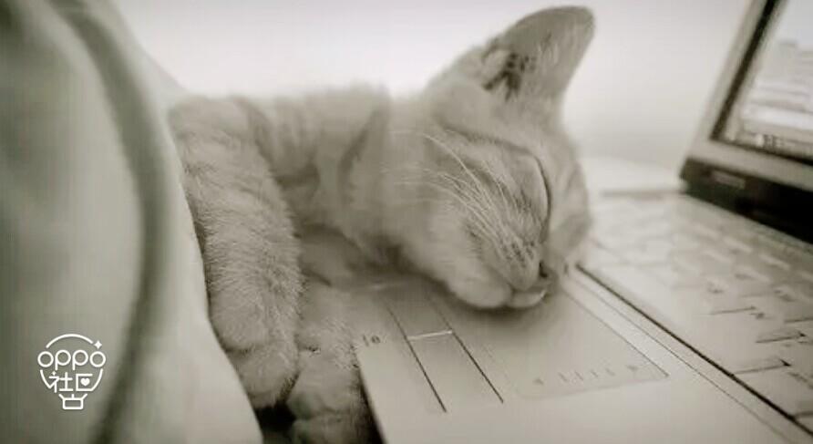 开心啦,心好累