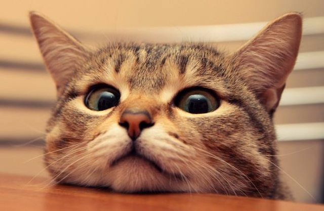 壁纸 动物 猫 猫咪 小猫 桌面 640_416
