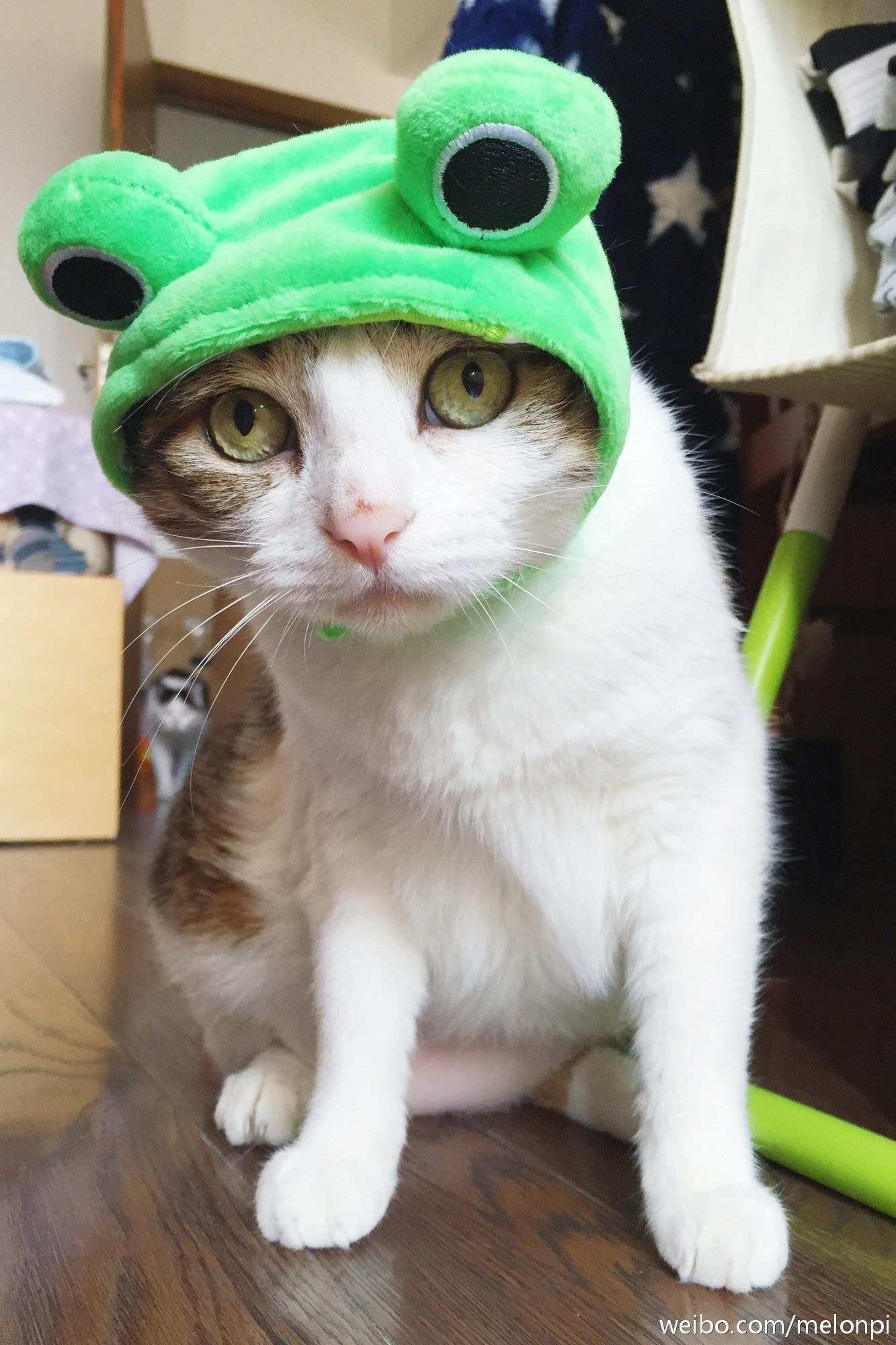 壁纸 动物 狗 狗狗 猫 猫咪 小猫 桌面 1333_2000 竖版 竖屏 手机