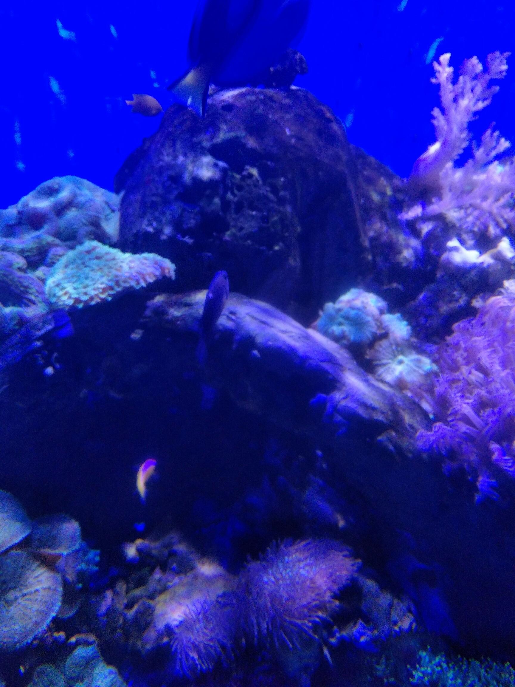 苏教版海底世界板书