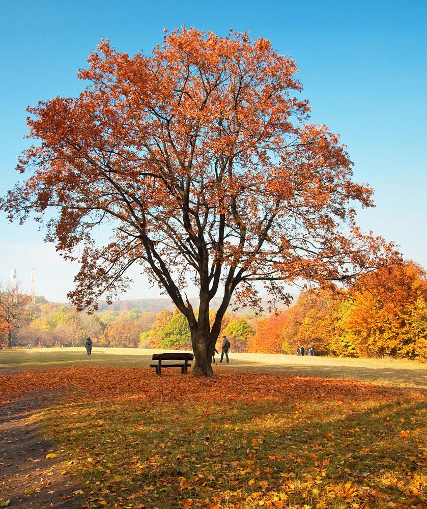 树的图画大全大图
