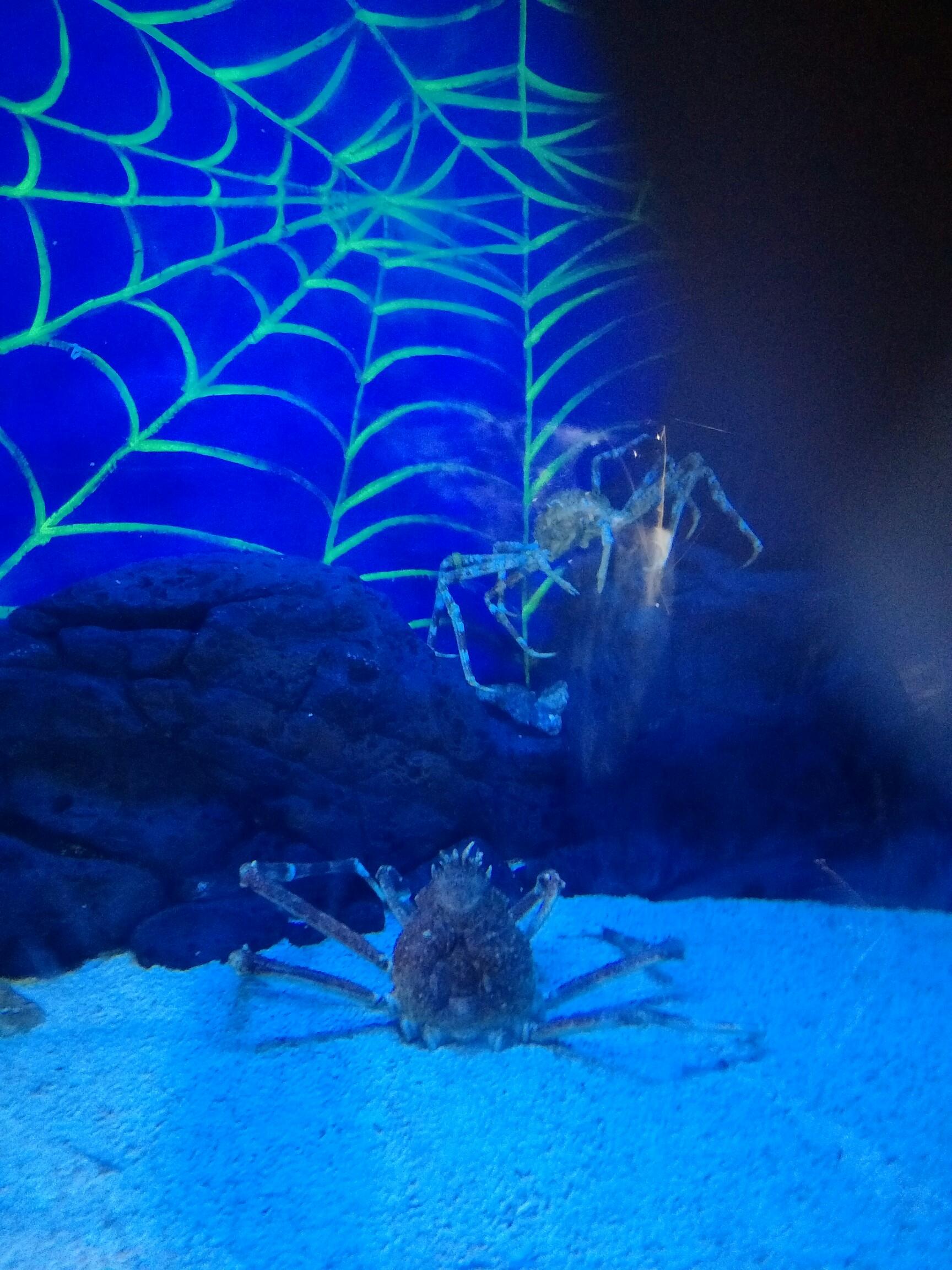 壁纸 海底 海底世界 海洋馆 水族馆 桌面 1728_2304 竖版 竖屏 手机