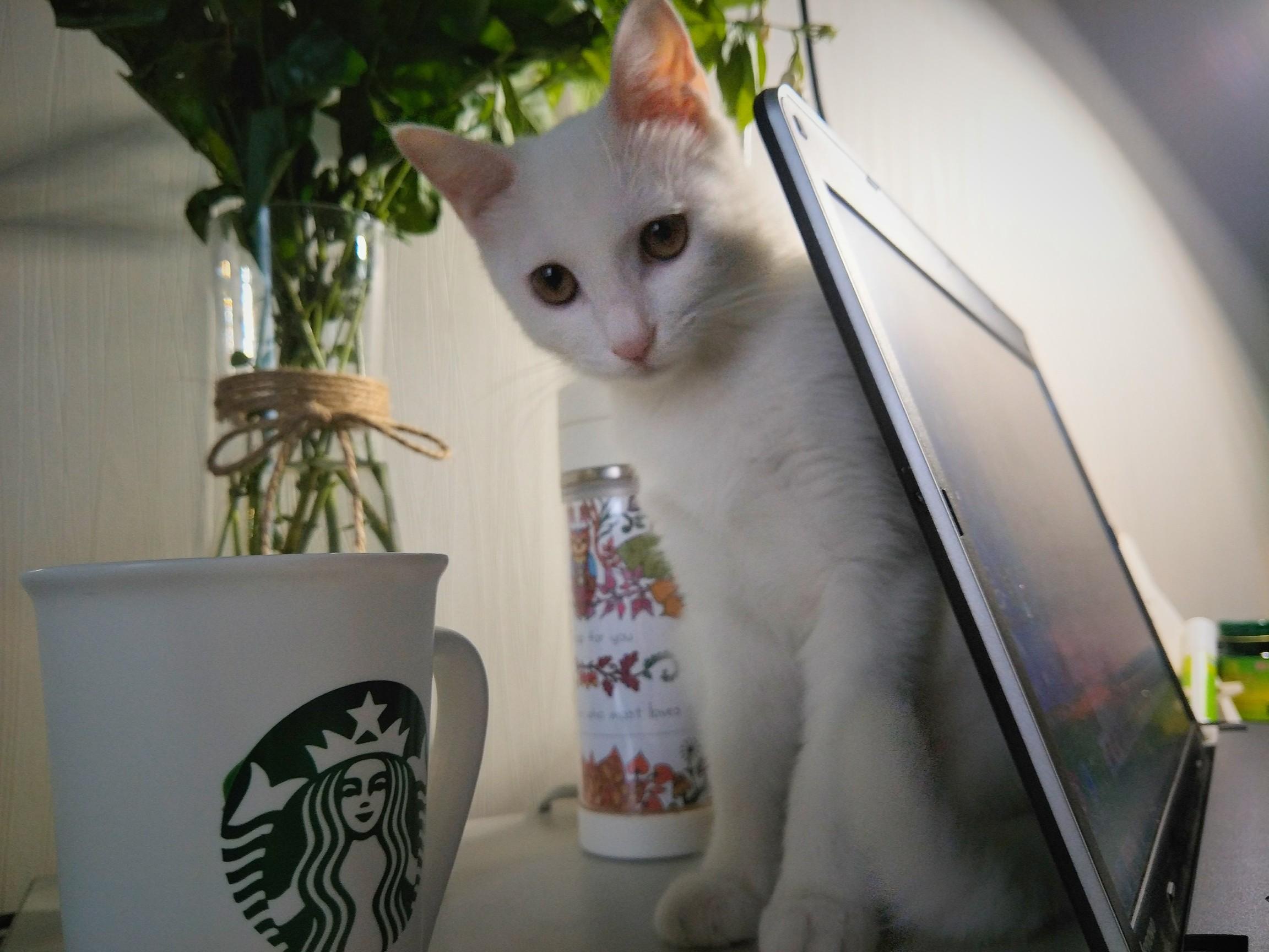 杯子猫咪可爱图片