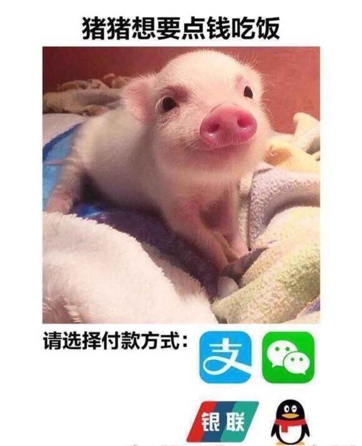 饥饿的猪图片可爱
