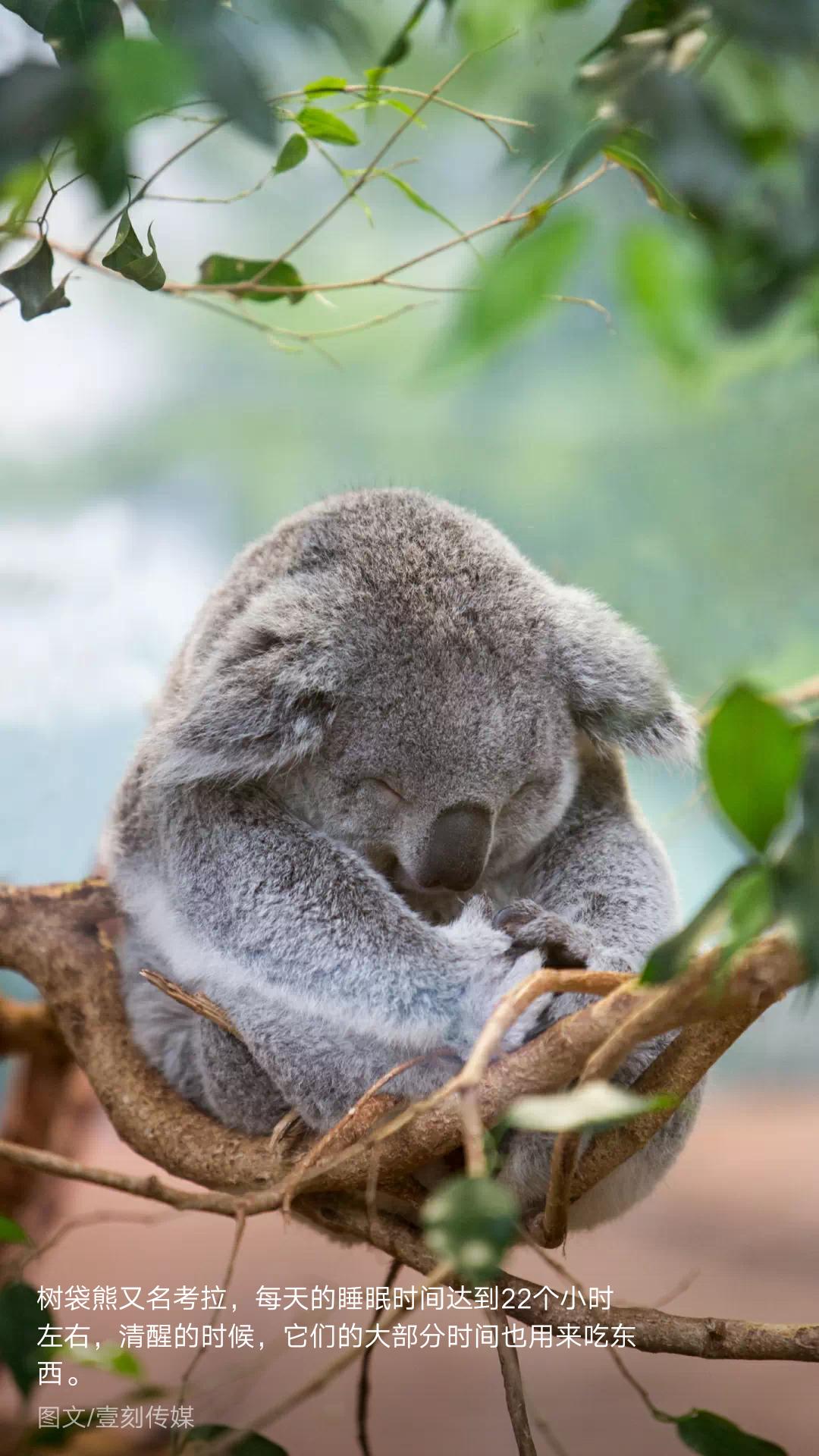 可爱的动物世界