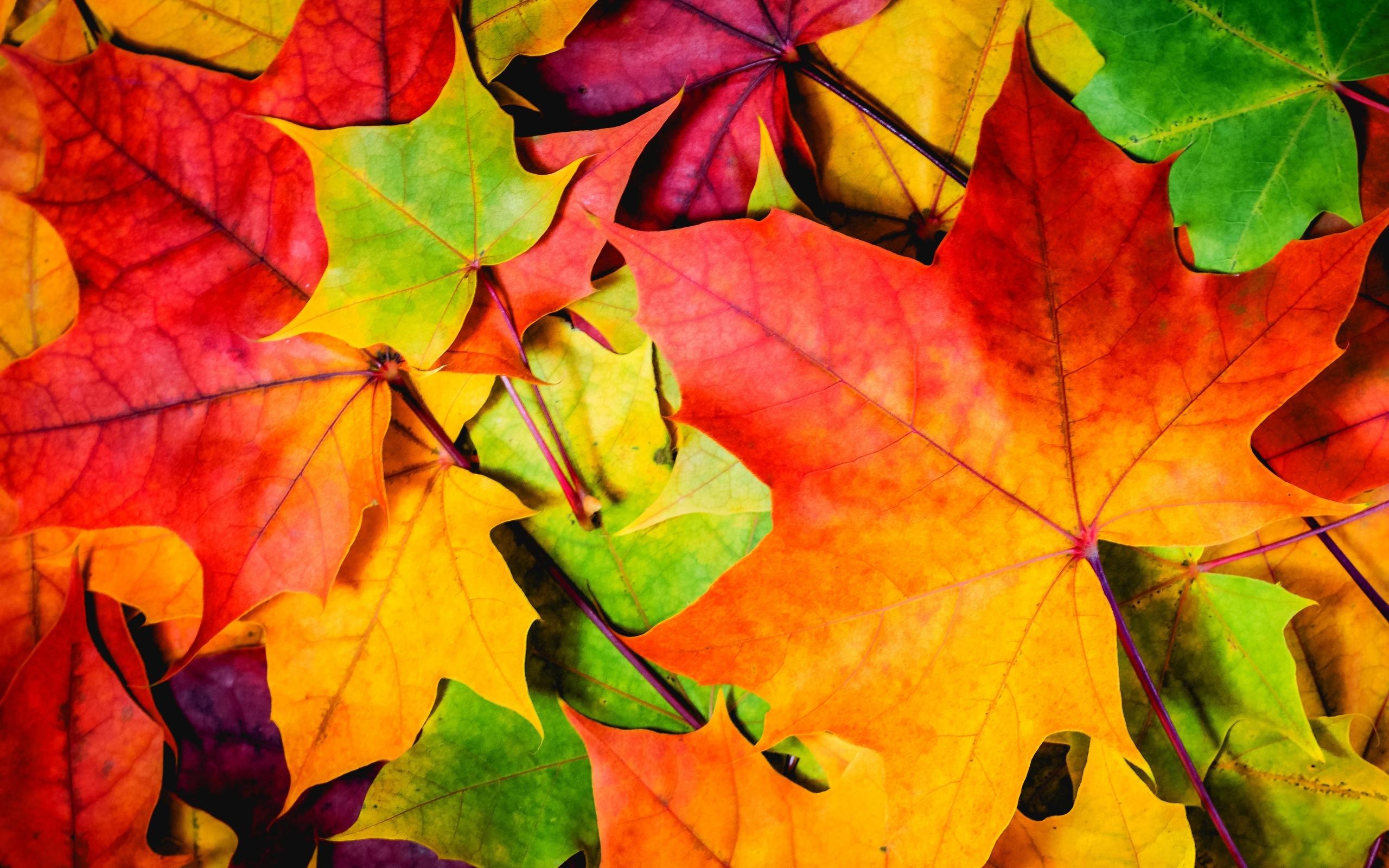 幼儿园以秋天的树叶为题的月计划