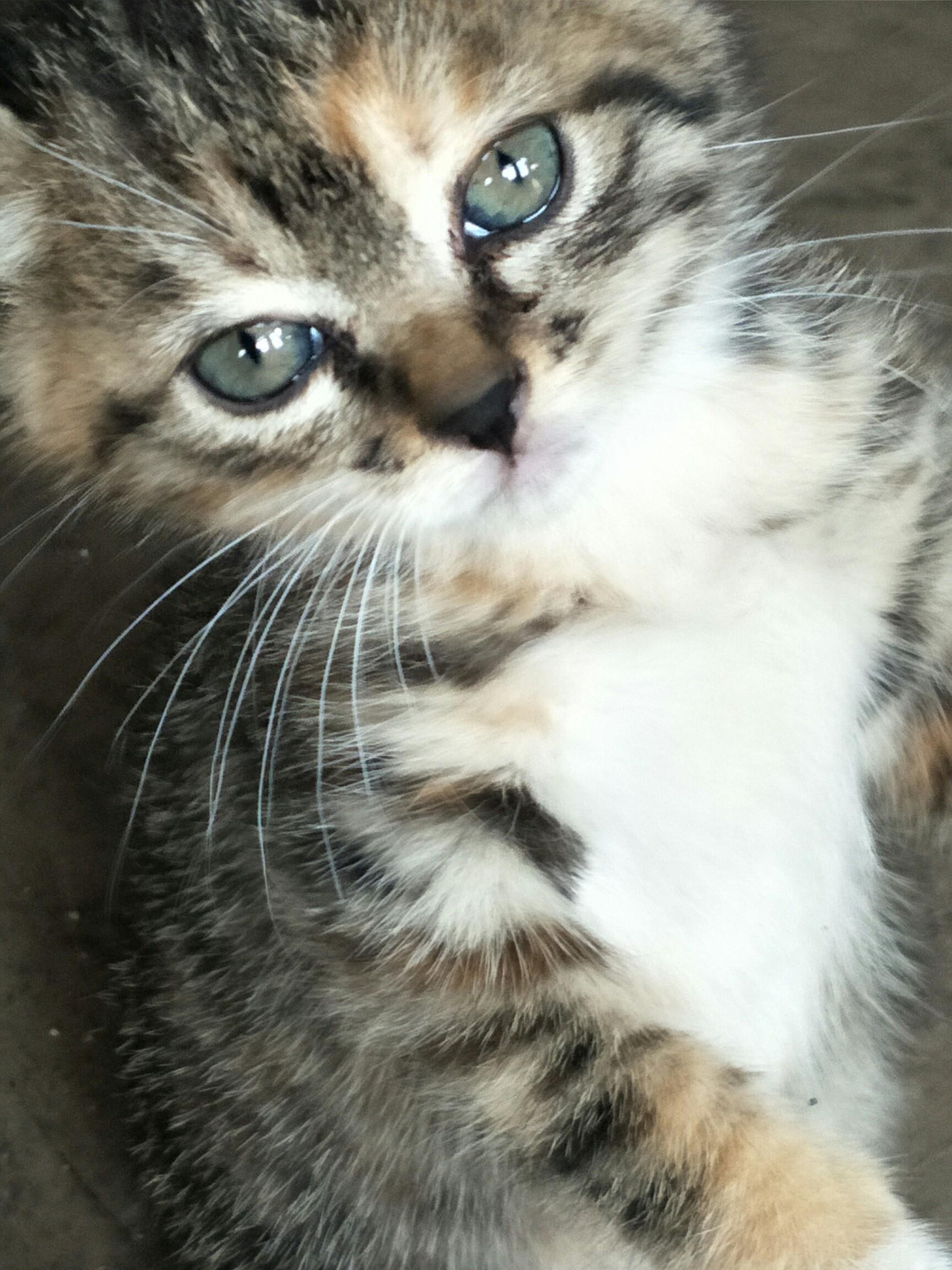 可爱小猫仔