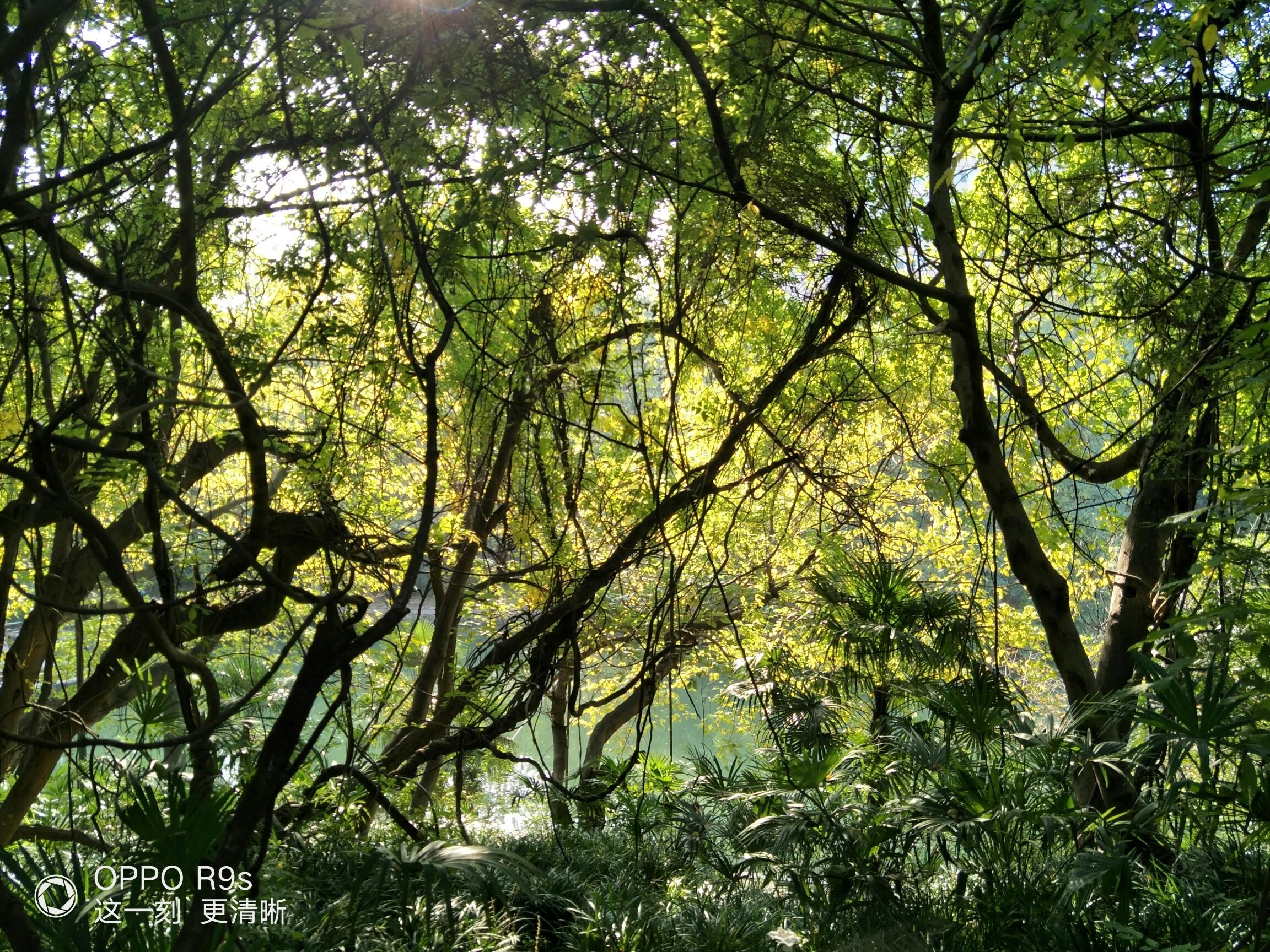 老树枯藤乌鸦,小桥流水人家.