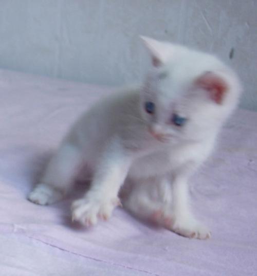 我家的小猫,可爱吗?它叫琪琪,活泼,可爱,是我的保.